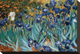 Irisar, Saint-Remy, 1889 Sträckt kanvastryck av Vincent van Gogh