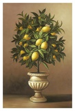 Potted Lemon Tree Posters par  Welby
