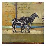 Zebra aus der Serengeti Poster von  Fischer & Warnica