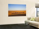 Tunisia, Ksour Area, Ksar Ghilane, Grand Erg Oriental Desert, Camel Caravan Vægplakat af Walter Bibikow