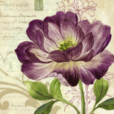 Study in Purple II Posters av Pamela Gladding
