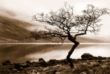 Loch Etive Prints by Danita Delimont