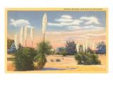 """Yucca-Palmen """"Spanisches Bayonet"""" in der Wüste Kunstdrucke"""