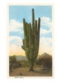 World's Largest Saguaro Cactus Poster