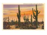 Saguaro-Kakteen Kunstdrucke