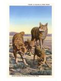 Kojotenfamilie Giclée-Premiumdruck