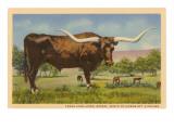 Texas Longhorn Steer Stampa