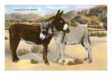 Aneinandergekuschelte Esel, Romanze in den Rocky-Mountains Giclée-Premiumdruck