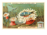 Aquatic Fauna, Sea Anemones Plakater