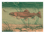 Woodcut of Rainbow Trout Giclée-Premiumdruck