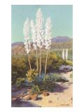 Yuccas in Bloom Kunstdrucke
