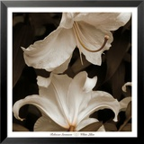 White Lilies Posters by Rebecca Swanson