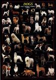 犬 アートポスター : リア・スタン