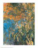 Iris, 1914-1917 Plakater av Claude Monet