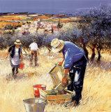 La raccolta delle olive Poster di Andre Deymonaz