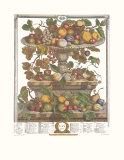 Twelve Months of Fruits, 1732, June Poster tekijänä Robert Furber