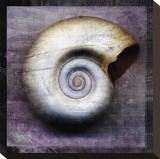 Moon Snail Stretched Canvas Print by John Golden