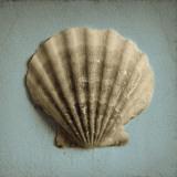 Seashell Study II Posters av Heather Jacks