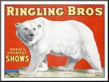 Ringling Brothers: Polar Bear Lámina montada en tabla
