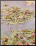 Red Water Lilies Druck aufgezogen auf Holzplatte von Claude Monet