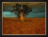 A Boab Tree Framed Photographic Print by Sam Abell