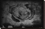 Bleeding Rose Bedruckte aufgespannte Leinwand von Blake Votaw