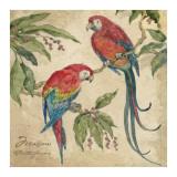 Macaw Prints by Betty Whiteaker