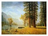 Hetch Hetchy Valley, California Poster af Albert Bierstadt