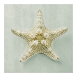 Ocean Jewel III Prints by Suzanne Goodwin