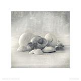 Still Life of Shells II Reproduction procédé giclée par Ian Winstanley