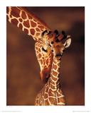 Giraffe Giclée-Druck von Karl Amman