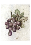 Glorious Grapes Poster by Carol Kemery