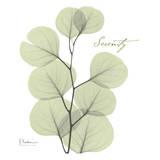 Eucalyptus Green, Serenity Stampe di Albert Koetsier