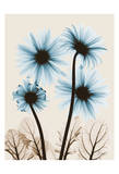 Blue Gerbera Bouquet Art by Albert Koetsier