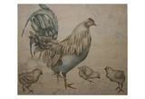 Hen And Chicks Prints by Carol Kemery
