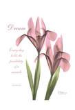 Pink Iris, Dream Stampe di Albert Koetsier