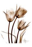 Tulip Arrangement in Brown Posters van Albert Koetsier