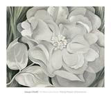 The White Calico Flower  c1931