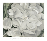 The White Calico Flower, c.1931 Posters av Georgia O'Keeffe