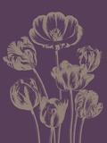 Tulip, no. 13 Affiches par  Botanical Series