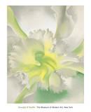 蘭 1942年 (An Orchid) ポスター : ジョージア・オキーフ