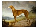 A Tan Greyhound Bitch in an Extensive River Landscape Giclée-tryk af F. H. Roscoe