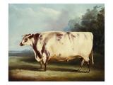 A Prize Bull Stampa giclée di William Henry Davis