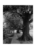 House & Garden - July 1948 Premium fototryk af André Kertész