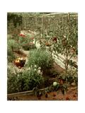 House & Garden - January 1956 Premium fototryk af André Kertész