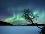 Revontulet Sandvannetjärven yllä, Tromssa Norja Valokuvavedos tekijänä Stocktrek Images,