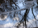 Leafless Trees Casting Reflections in Calm Water Fotografisk tryk af Charles Kogod