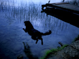A Dog Jumping into Lake Banyoles Photographic Print by Tino Soriano