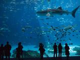 Visitors at the Georgia Aquarium in Atlanta Fotografisk trykk av Krista Rossow