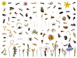 Mountain fynbos species collected within a one cubic foot metal cube